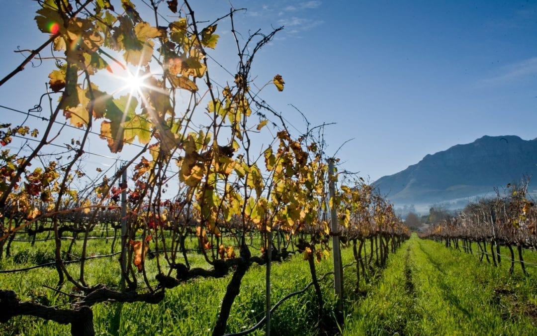 Back to basics with Sauvignon Blanc (by Johan Botha)